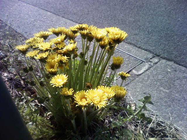 珍しい花束